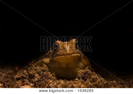 Toad With Funny Look