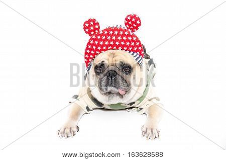 funny pug dog puppy with hip hop hat and soldier costume. isolated on white background