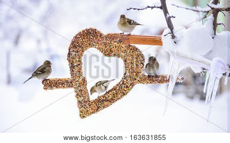 winter season and problem of hunger ;wild birds love the creative concept