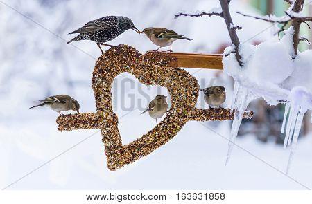 wild birds love the creative concept.amazing birds and creativity concept