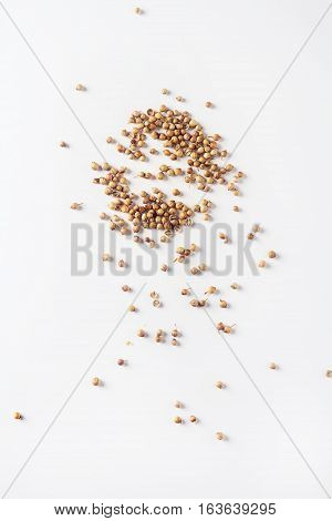 Spices For Meat Dishes And Baking. Whole Coriander Seeds. White
