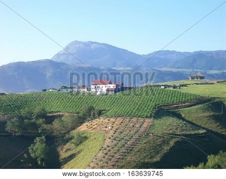 Hilly landscape with mountains vineyards and houses