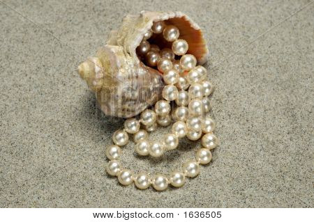 Snail With Pearls On The Beach Detail