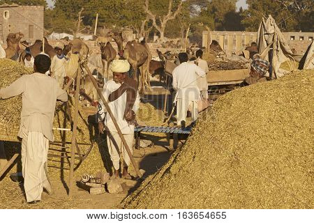 NAGAUR, RAJASTHAN, INDIA - FEBRUARY 14, 2008: Piles of ground up plant material for sale as animal fodder at the annual livestock fair in Nagaur, India.