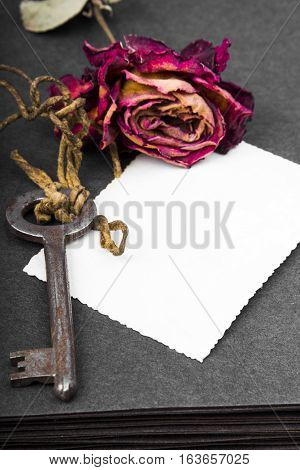 Dried red rose and blank photograph, copy space