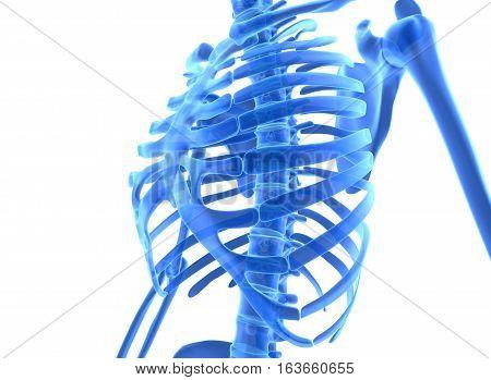 3D Illustration Of Shiny Blue Skeleton System.