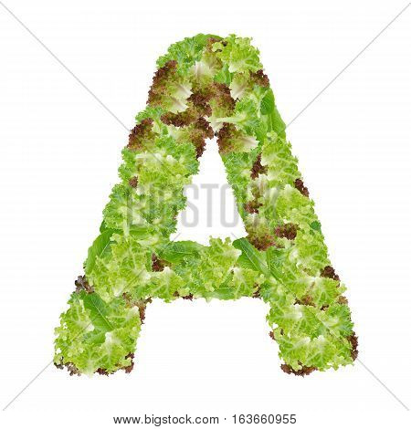 Letter A alphabet with hydroponics leaf ABC concept type as logo isolated on white background