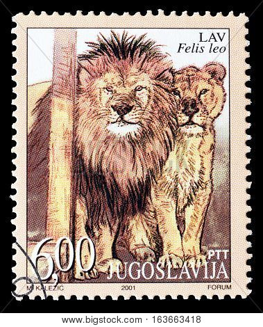 YUGOSLAVIA - CIRCA 2001 : Cancelled postage stamp printed by Yugoslavia, that shows Lion.