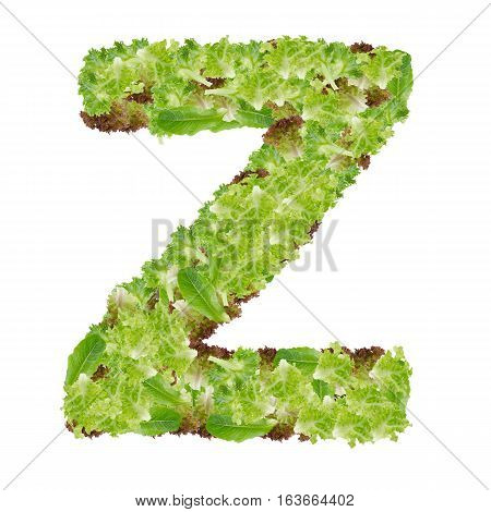 Letter Z alphabet with hydroponics leaf ABC concept type as logo isolated on white background