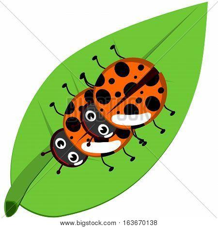 Ladybug On Leaf, Isolated On White Background, Vector Illustration