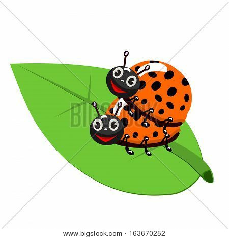 Ladybug mating on leaf, Isolated On White Background, Vector Illustration