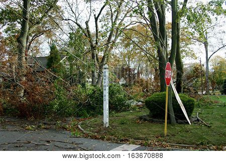 Super storm Sandy's wind takes down trees and power lines in Babylon Village NY Long Island