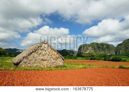 Shelter for the drying of tobacco leaves from which next the best cigars are being made in the world. Valle de Vinales Cuba Pinar del Rio province
