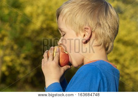 Child little blond boy eating red apple outdoor in the garden. Kids, lifestyle concept. Child  eating healthy food