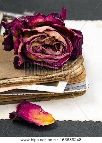 dried rose old book and empty photograph and as a romance metaphor