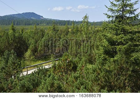 Three lake moor (Trijezerni slat), National Park Sumava, Bohemian forest, Czech Republic