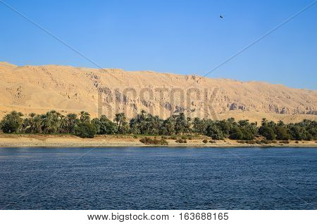 Oasis with palm trees along the shore of the Nile River in Egypt Africa