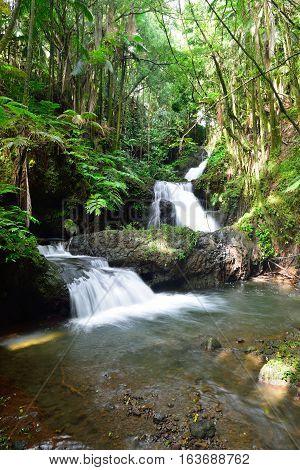 Onomea Waterfalls