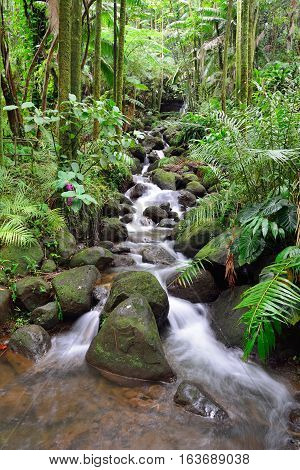 Beautiful Waterfall In The Green Tropical Forest