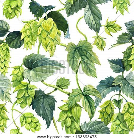 Seamless pattern of hops vine painted with watercolour on white background