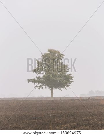 A tree standing alone on a cold fall morning that had lots of fog cover, creating a lonely, eerie scene