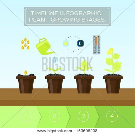 Steps of a plant growing. Infographic illustration of plant growing in four steps