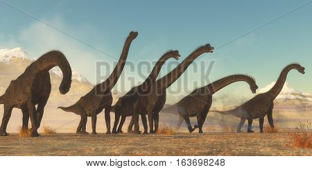 Brachiosaurus Dinosaur Herd 3D illustration - A Brachiosaurus dinosaur herd pass through a dry desert area in the Jurassic Period of North America.