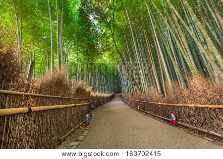 Bamboo forest of Arashiyama at Kyoto Japan.