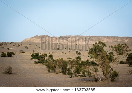 View on hills and plants of Maranjab Desert in Iran