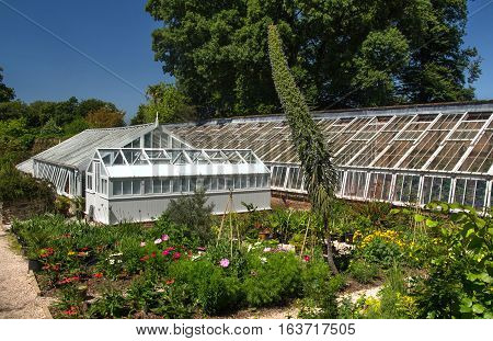 GREENWAY, UK, 19.07.2016: glass greenhouse in an English garden. Devon. UK