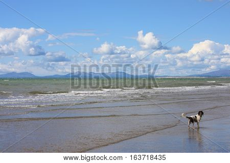 A dog on a beach stood in the sea