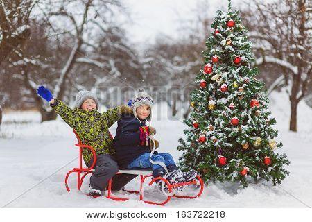 Happy boys sledding near christmas tree in winter day outdoor.