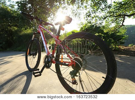 mountain bike ready for riding on forest trail