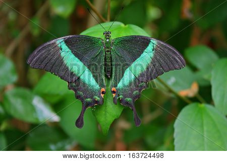 Beautiful Pretty Colourful Butterfly With Wings Spread