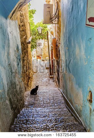 Old Stone Street Alleyway Black Cat Safed Tsefat Israel Many famouse synagogues located in Safed.