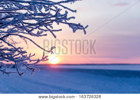 branch covered with frosty rime. frosty winter, sunny day. sunset through the frost.