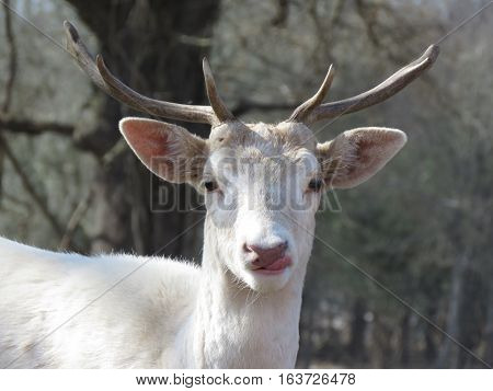 white deer image on a nature background