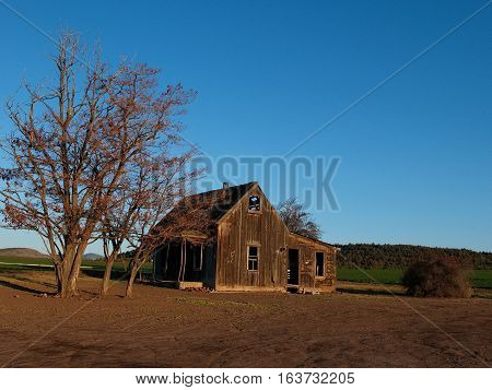 An abandoned farm house with trees and a field on a Spring day in Central Oregon near Culver.