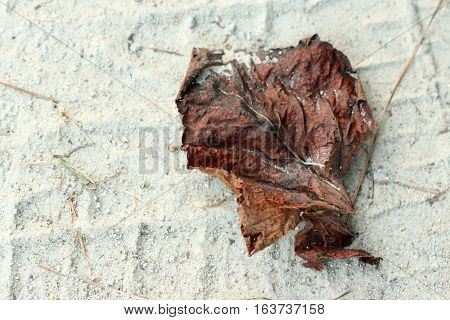 A brown dead leaf sitting on beach sand with pine needles around