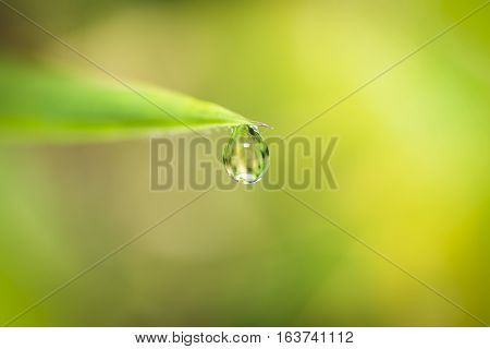 drop water the end leaf and blur background