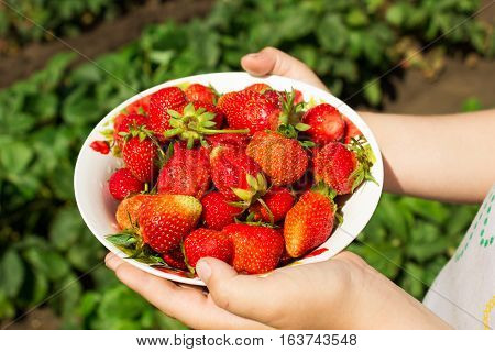 Ripe Red Strawberry In A Plate Against