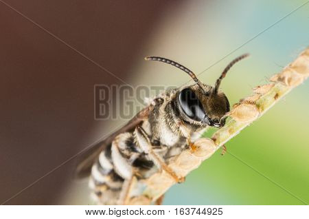 A Hoverfly on a tree limb is resting, close up