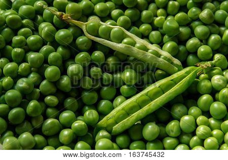 Photograph of very farm fresh Green Peas