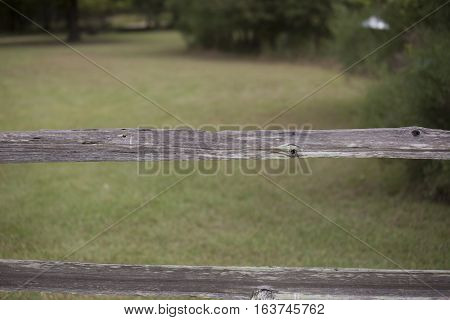 Fence blocking off a beautiful green pasture