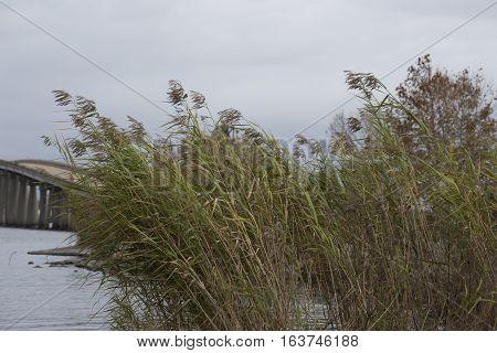 Weeds in front of lake bridge overpass