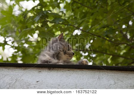 Cat On Roof