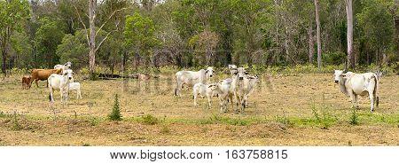 Australian Country Scene