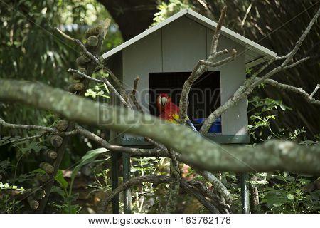 Scarlet macaw bird near a bird house