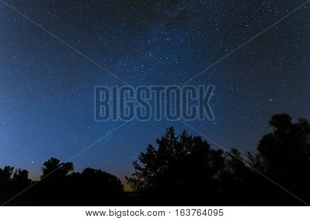 Millions of stars above the treetops. Night background.
