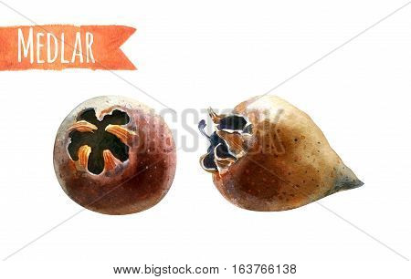 Medlar isolated on white, hand-painted watercolour illustration